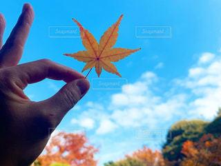 鮮やかな秋空の写真・画像素材[2930992]