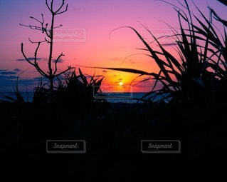 夕焼けを望むの写真・画像素材[2279647]