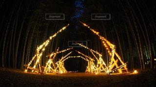 夜にライトアップされた竹林の写真・画像素材[2280182]