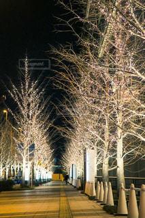 冬,屋外,大阪,光,樹木,イルミネーション,道,キラキラ,照明,ツリー,明るい,街路樹,草木,ゴールド