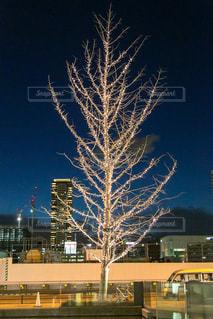 空,冬,夜,屋外,夕焼け,光,樹木,イルミネーション,道,照明,ツリー,明るい,街路樹,ゴールド
