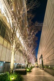 空,建物,屋外,樹木,イルミネーション,都会,道,キラキラ,高層ビル,照明,アーチ,明るい,街路樹,クリスマス ツリー