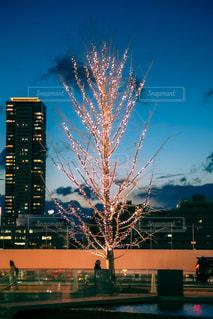 空,木,屋外,夕暮れ,光,樹木,イルミネーション,道,キラキラ,高層ビル,照明,マジックアワー,街路樹,クラウド