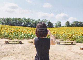 ひまわり畑の写真・画像素材[2616677]