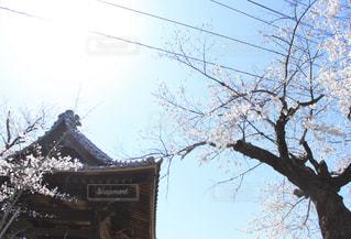空,建物,桜,屋外,花見,樹木,城山公園