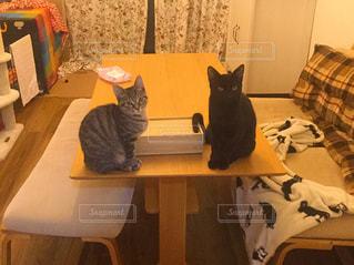 テーブルの上で待つ猫の写真・画像素材[2753554]