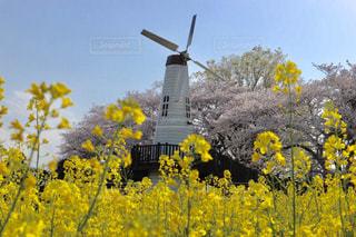 空,花,屋外,風車,景観,草木