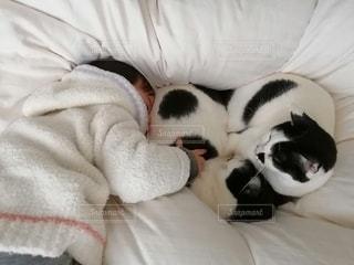 子ども,猫,動物,白,ペット,人物,赤ちゃん,ネコ,ベッド