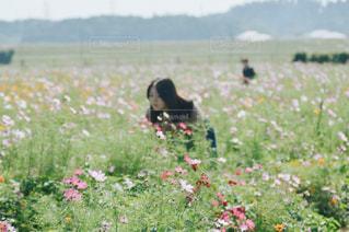 女性,花,春,夏,秋,冬,花畑,コスモス,晴れ,散歩,女,ポートレート,ポーズ,デート,コスモス畑,cosmos