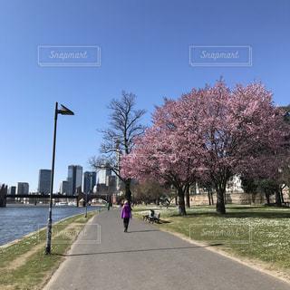 空,花,春,桜,屋外,散歩,ヨーロッパ,標識,草,樹木,道,ドイツ,川沿い,通り,草木,フランクフルト