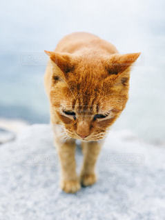 海辺にいる猫ちゃんの写真・画像素材[2291556]