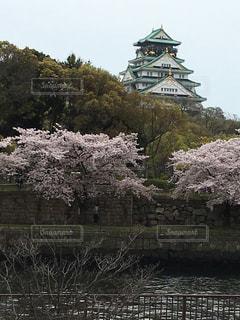 自然,空,公園,雲,青空,散歩,城,リバーサイド,散歩道,天気,石垣,桜の花,桜の木,さくら,晴れた日,リバー