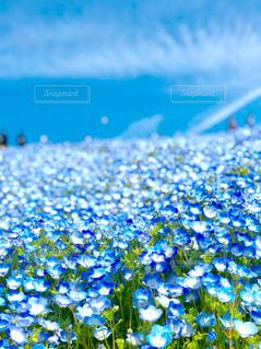 花のクローズアップの写真・画像素材[2289678]