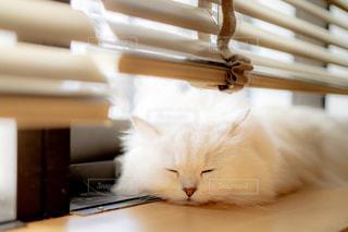 テーブルの上に座っている猫の写真・画像素材[2290417]