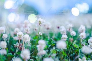 花のクローズアップの写真・画像素材[2290418]