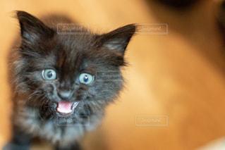 猫のクローズアップの写真・画像素材[2291850]
