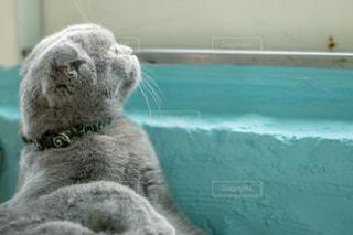 窓辺の猫の写真・画像素材[2291861]
