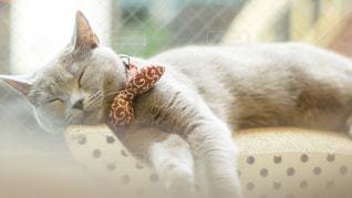 寝てる猫の写真・画像素材[2291864]