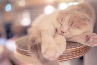 猫のクローズアップの写真・画像素材[2291869]