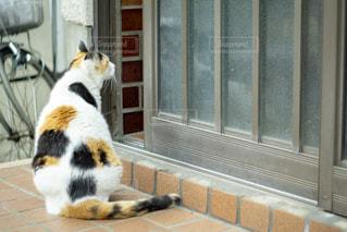 帰りたい猫の写真・画像素材[2291874]