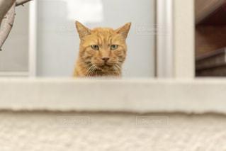 こっち見てくる猫の写真・画像素材[2291888]