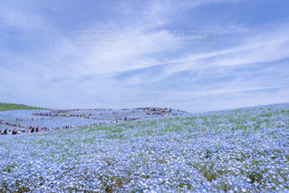 空,屋外,晴れ,青空,青,散歩,観光地,ネモフィラ,レジャー,お散歩,ライフスタイル,お出かけ