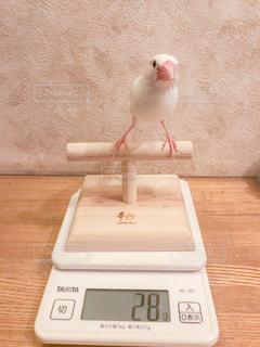 文鳥の計量の写真・画像素材[2326313]
