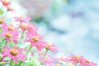 花のクローズアップの写真・画像素材[2344210]
