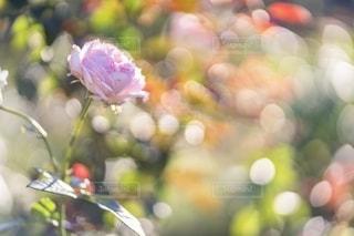 花をクローズアップするの写真・画像素材[2787917]