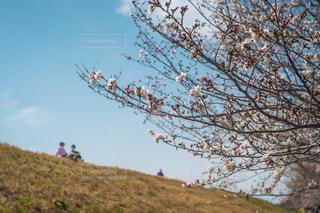家族,2人,空,花,春,桜,屋外,花見,丘,イベント,夫婦,土手