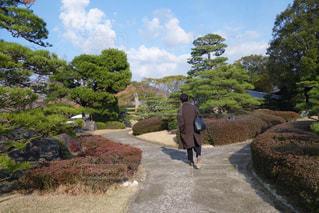 自然,屋外,緑,散歩,庭園