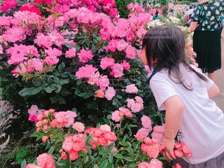 植物のピンクの花を見た少女の写真・画像素材[2293010]