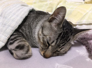 ベッドに横たわる猫の写真・画像素材[2293948]