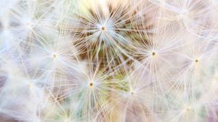 花の写真・画像素材[2293687]
