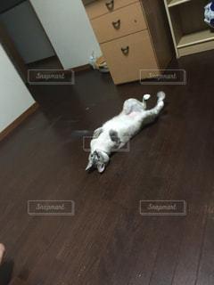 床に横たわる猫の写真・画像素材[2294253]