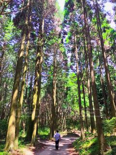 屋外,森,樹,晴れた日,大きな樹,旦那さんの後ろ姿