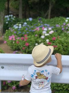紫陽花,初夏,男の子,お散歩,お出かけ,イヤイヤ期,二歳