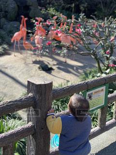 晴れ,フラミンゴ,動物園,男の子,息子,お散歩,1歳,お天気