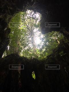 自然,森林,樹木,ハート
