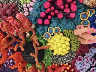 珊瑚の写真・画像素材[2364831]