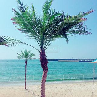 ヤシの木のあるビーチの写真・画像素材[2329024]