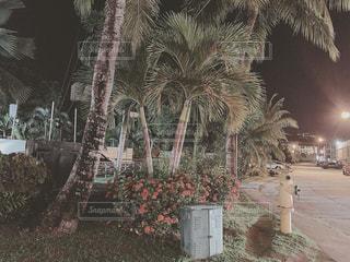 ヤシの木の写真・画像素材[2919364]