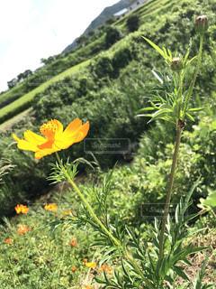 花,かくれんぼ,草木,てんとうむし