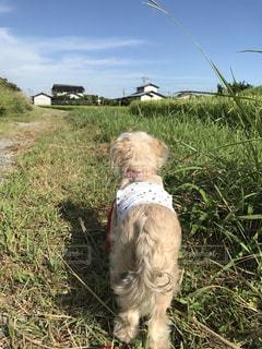 犬,屋外,草,犬の散歩,晴れた日,白い犬,遠くを見る犬