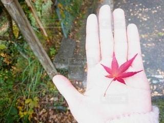 秋,屋外,手,お出かけ