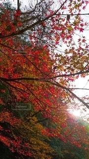 空,秋,紅葉,樹木,お散歩