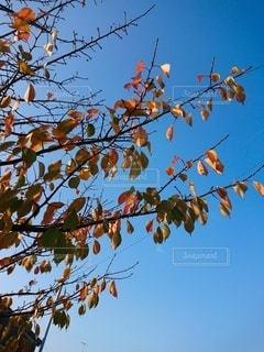 冬はすぐそこの写真・画像素材[2393731]