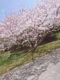 道路の脇に木がある道の写真・画像素材[2393736]