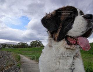 犬,雲,青空,散歩,ハート,偶然,雲の切れ間