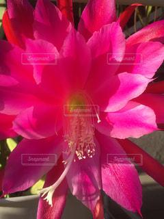 花のクローズアップの写真・画像素材[2382244]